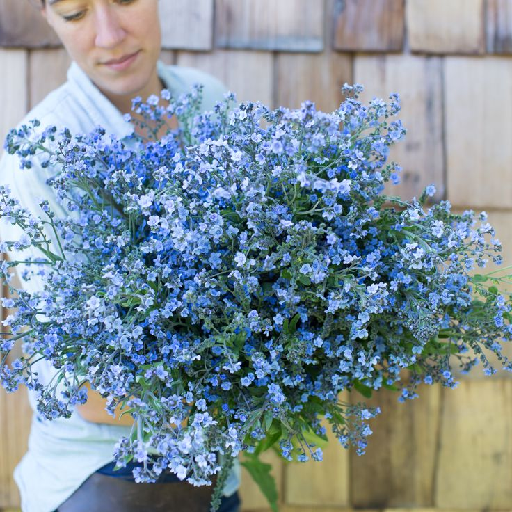 1000+ ideas about Myosotis Forget Me Not on Pinterest.