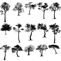 Cypress tree silhouette clipart.