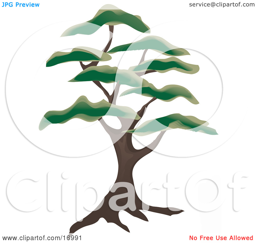 Free Clipart Of 7 Tree Silhouettes.