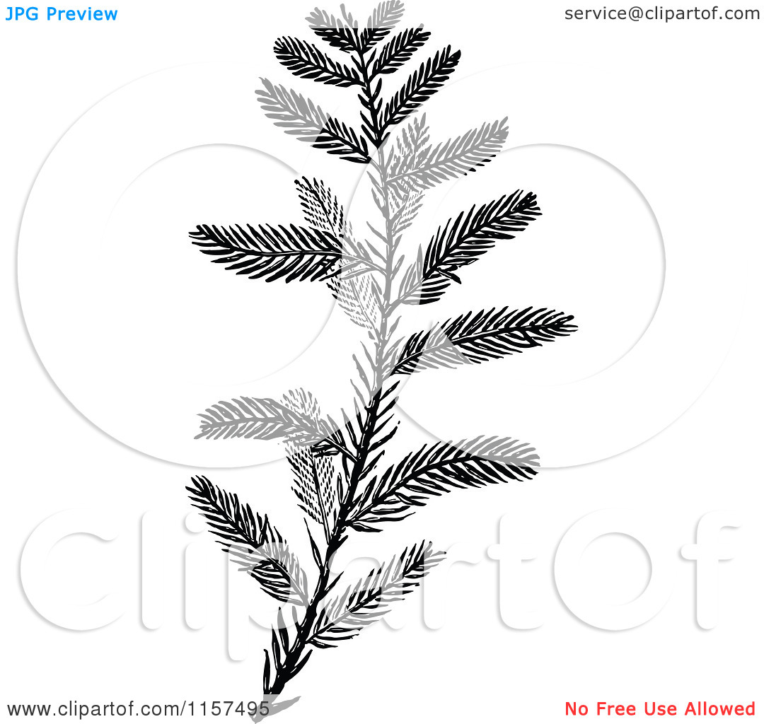 Clipart of a Retro Vintage Black and White Cypress Sprig.