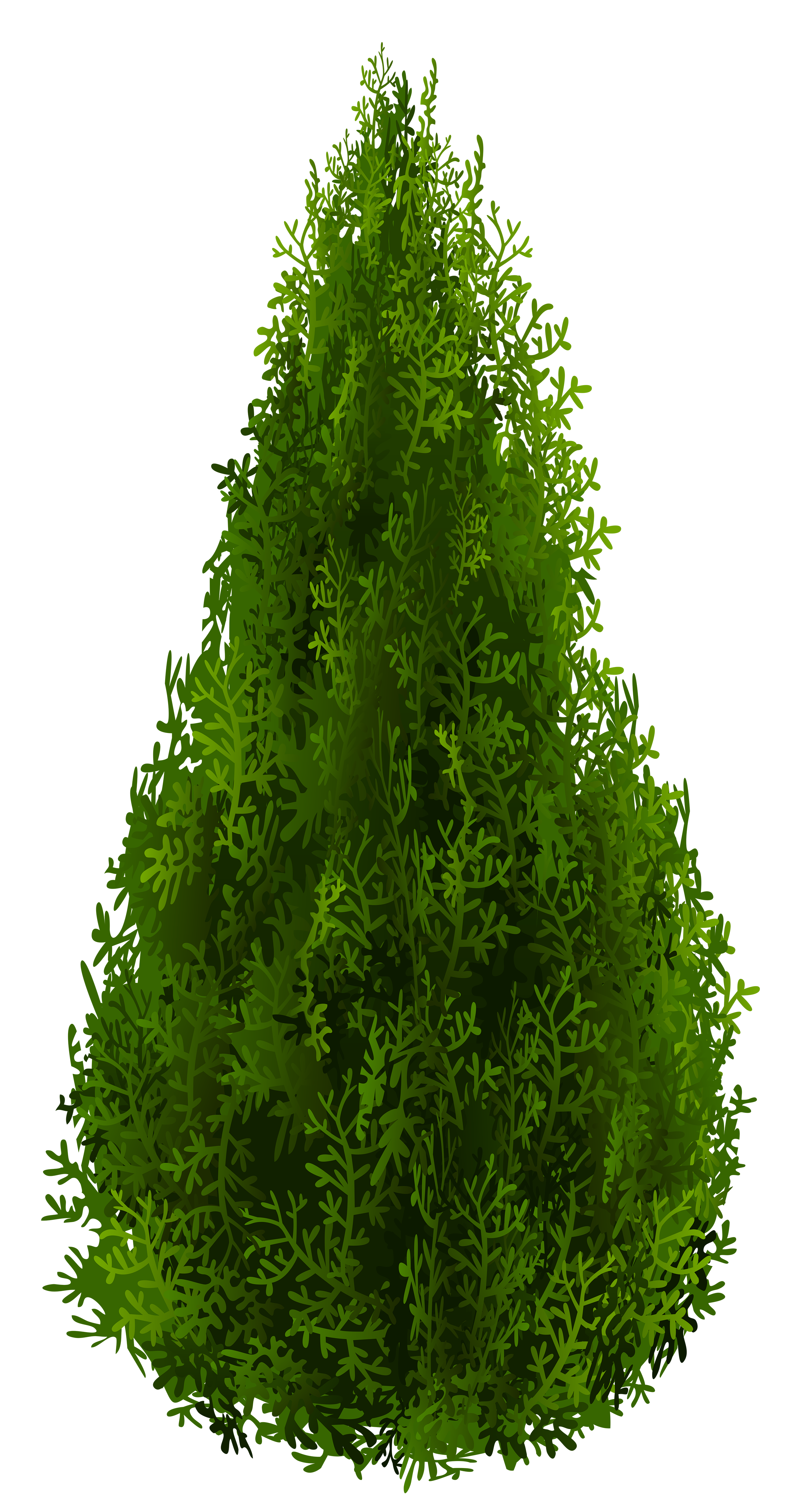 Cypress PNG Clipart Picture.