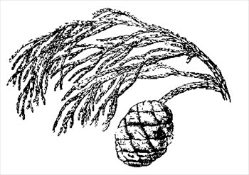 Free cypress Clipart.