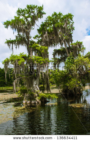 Cypress Swamp Stock Photos, Royalty.
