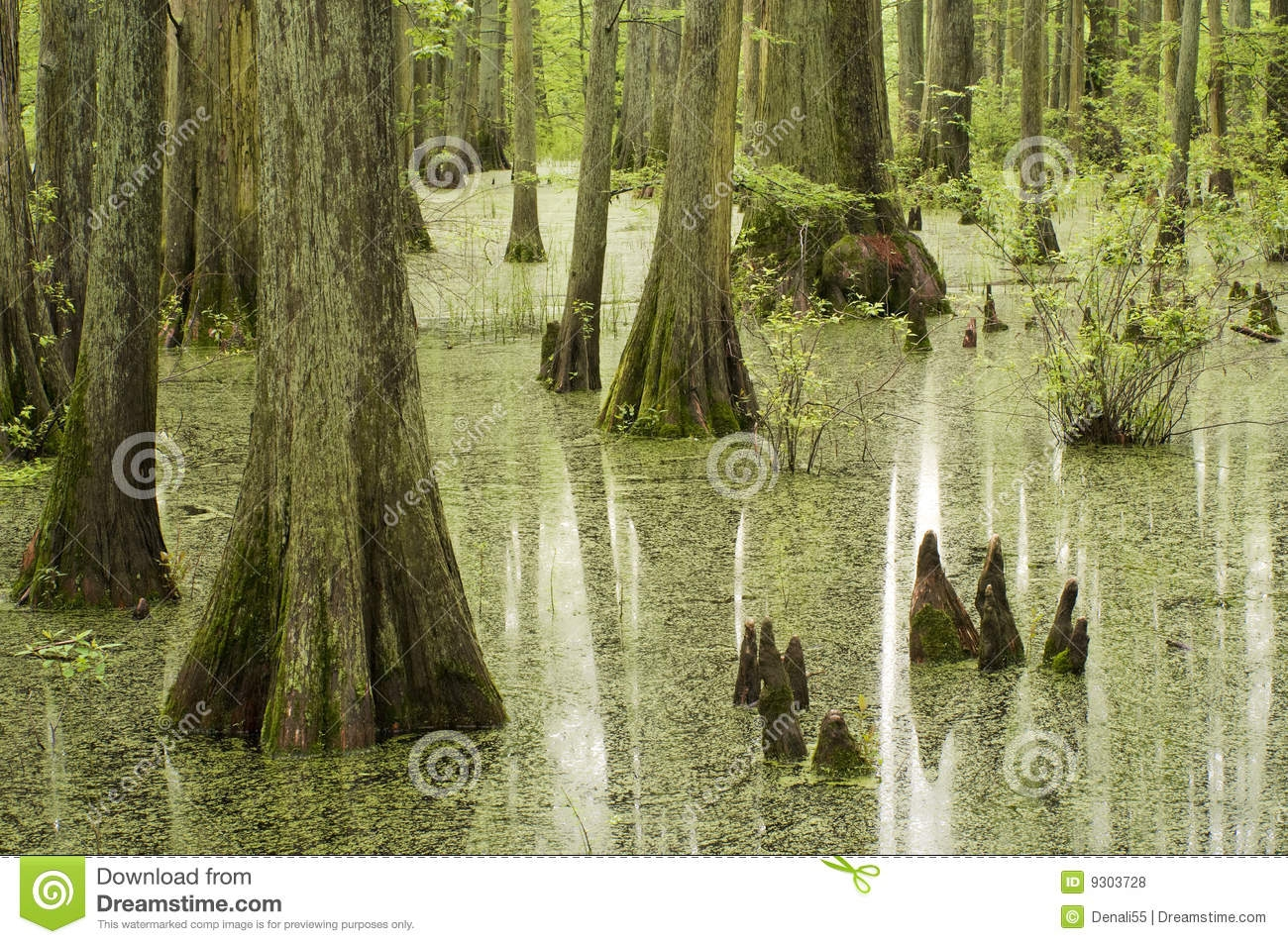 Swamp Tree Clipart.