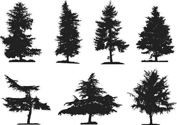 Cypress tree clipart 4 » Clipart Station.