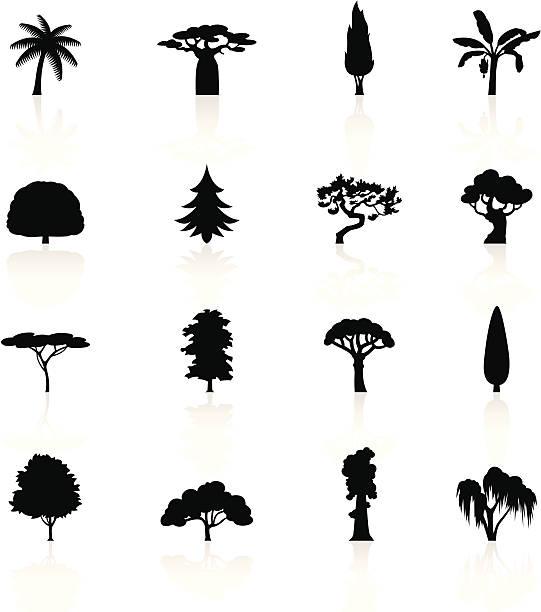 Best Cypress Tree Illustrations, Royalty.