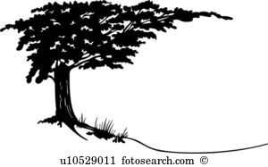 Cypress tree Clip Art and Illustration. 275 cypress tree clipart.