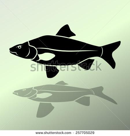 Cyprinidae Stock Vectors & Vector Clip Art.
