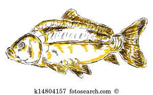 Cyprinus carpio Stock Illustration Images. 10 cyprinus carpio.