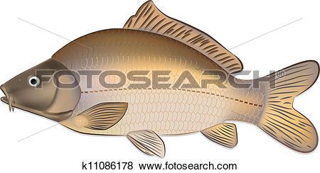 Clip Art of Carp fish (Cyprinus carpio) k11086178.