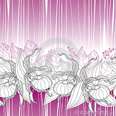 Cypripedium Stock Illustrations.
