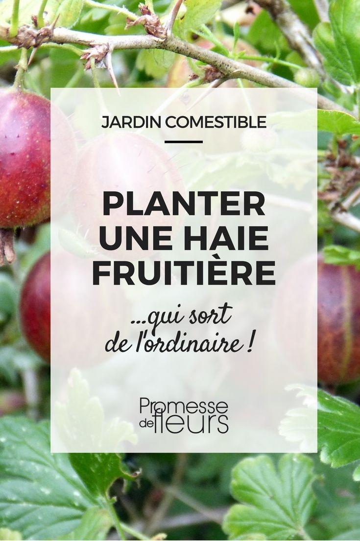 1000+ ideas about Arbre Pour Haie on Pinterest.