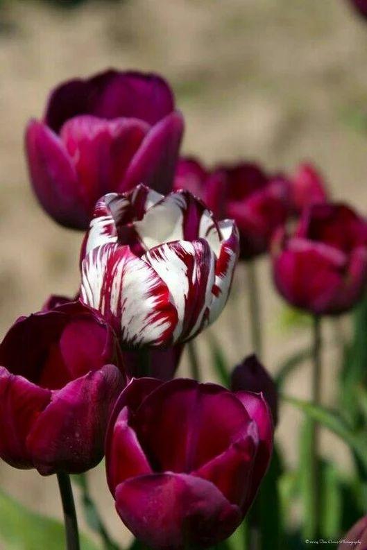 Több mint 1000 ötlet a következővel kapcsolatban: Virágok a.