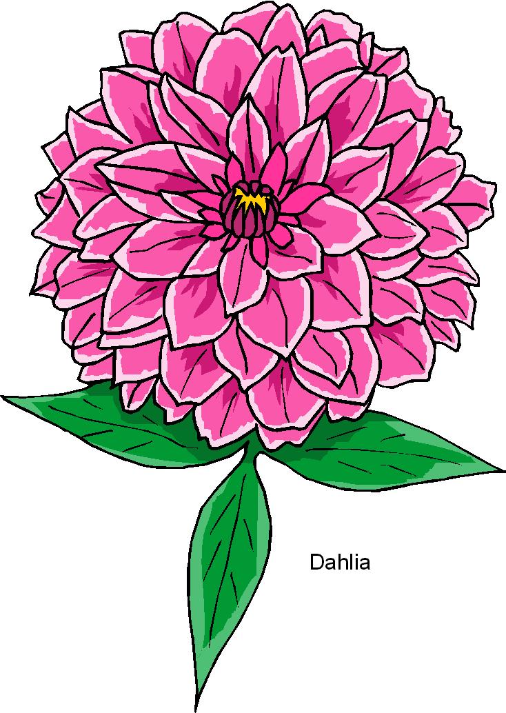 Dahlia Clipart.