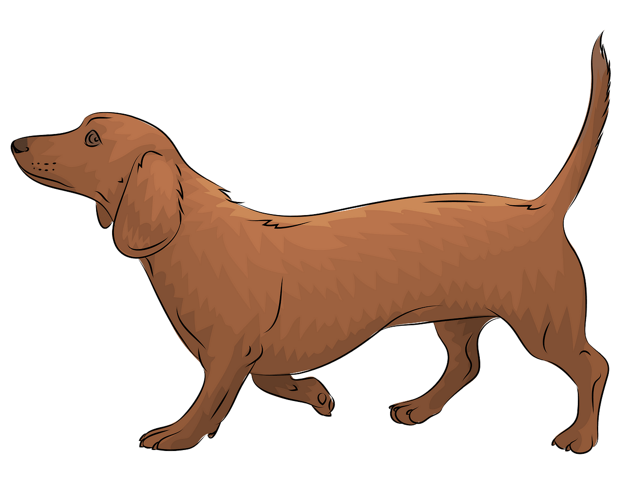 Dachshund clipart. Free download..