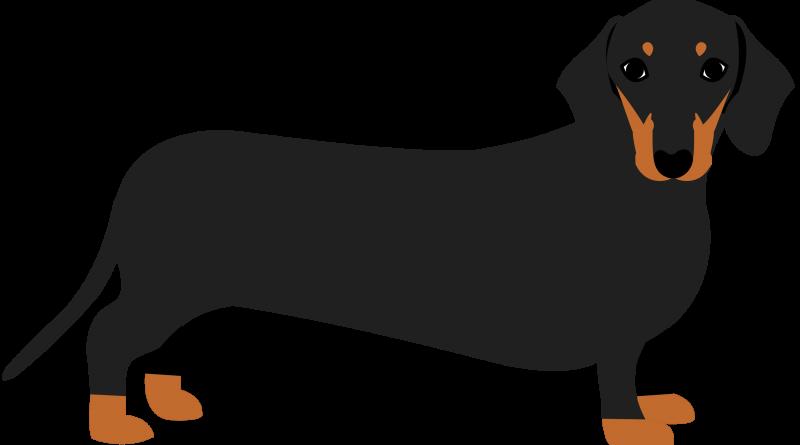 Dachshund clipart sausage dog, Dachshund sausage dog.