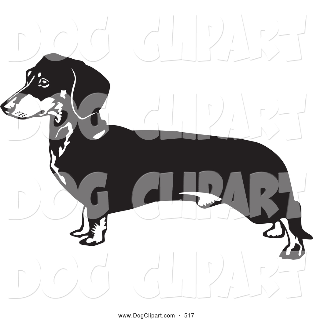 Clip Art of a Long Weener Dachshund, Doxie, Dackel, or Teckel Dog.