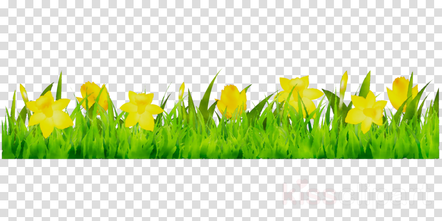 Illustration, Daffodil, Grass, transparent png image & clipart free.