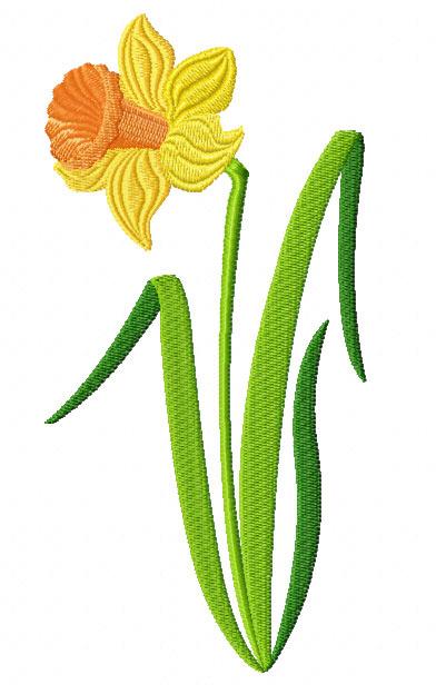 Daffodil image clipart.