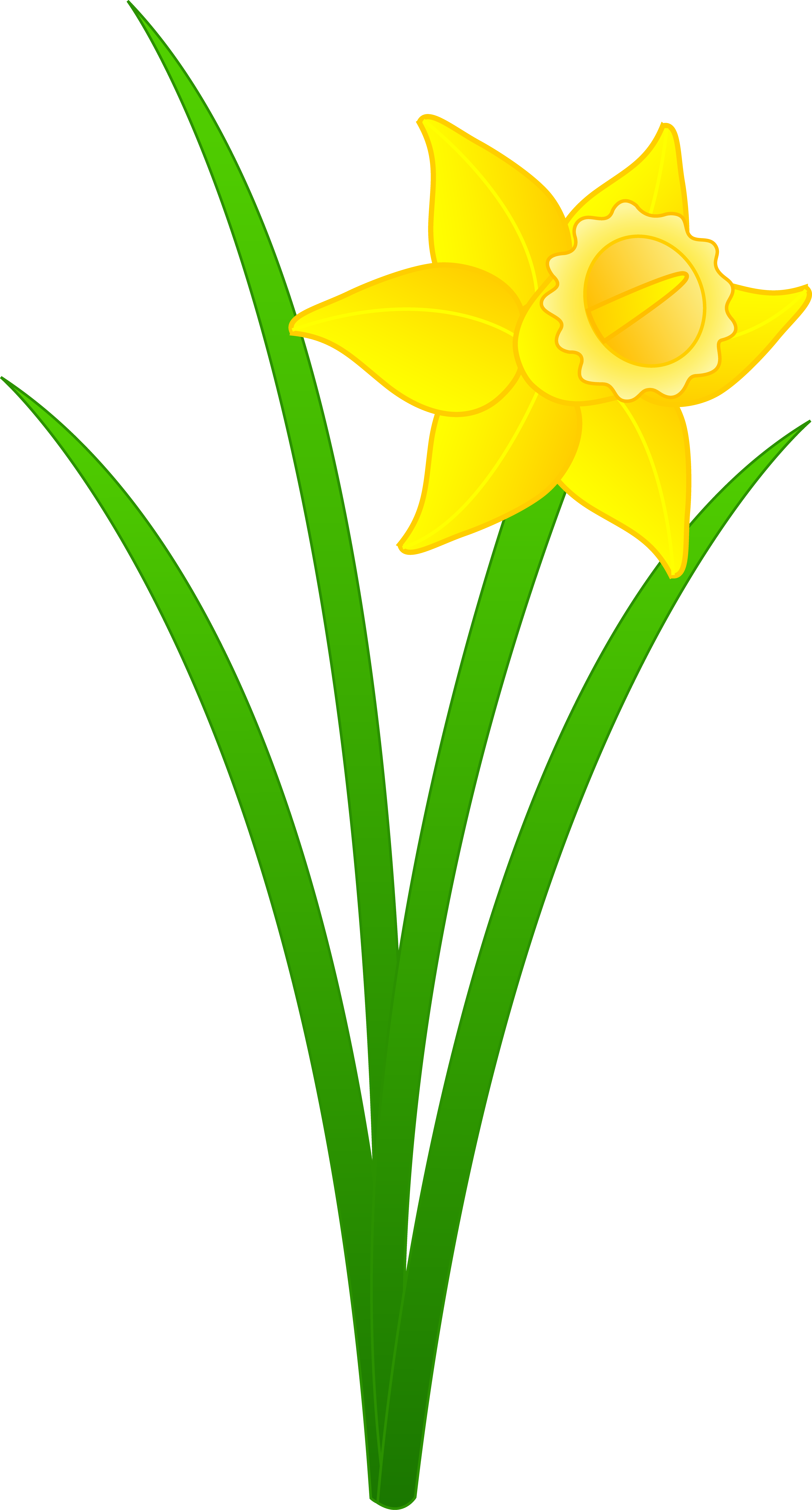 Daffodil Flower Clip Art.