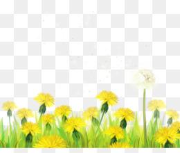 Daffodil PNG.