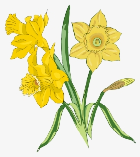 Free Daffodill Clip Art with No Background.