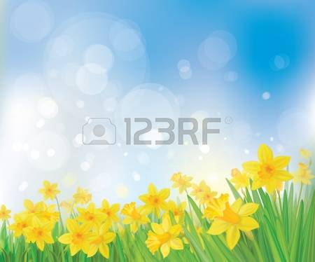 214 Daffodil Field Stock Illustrations, Cliparts And Royalty Free.