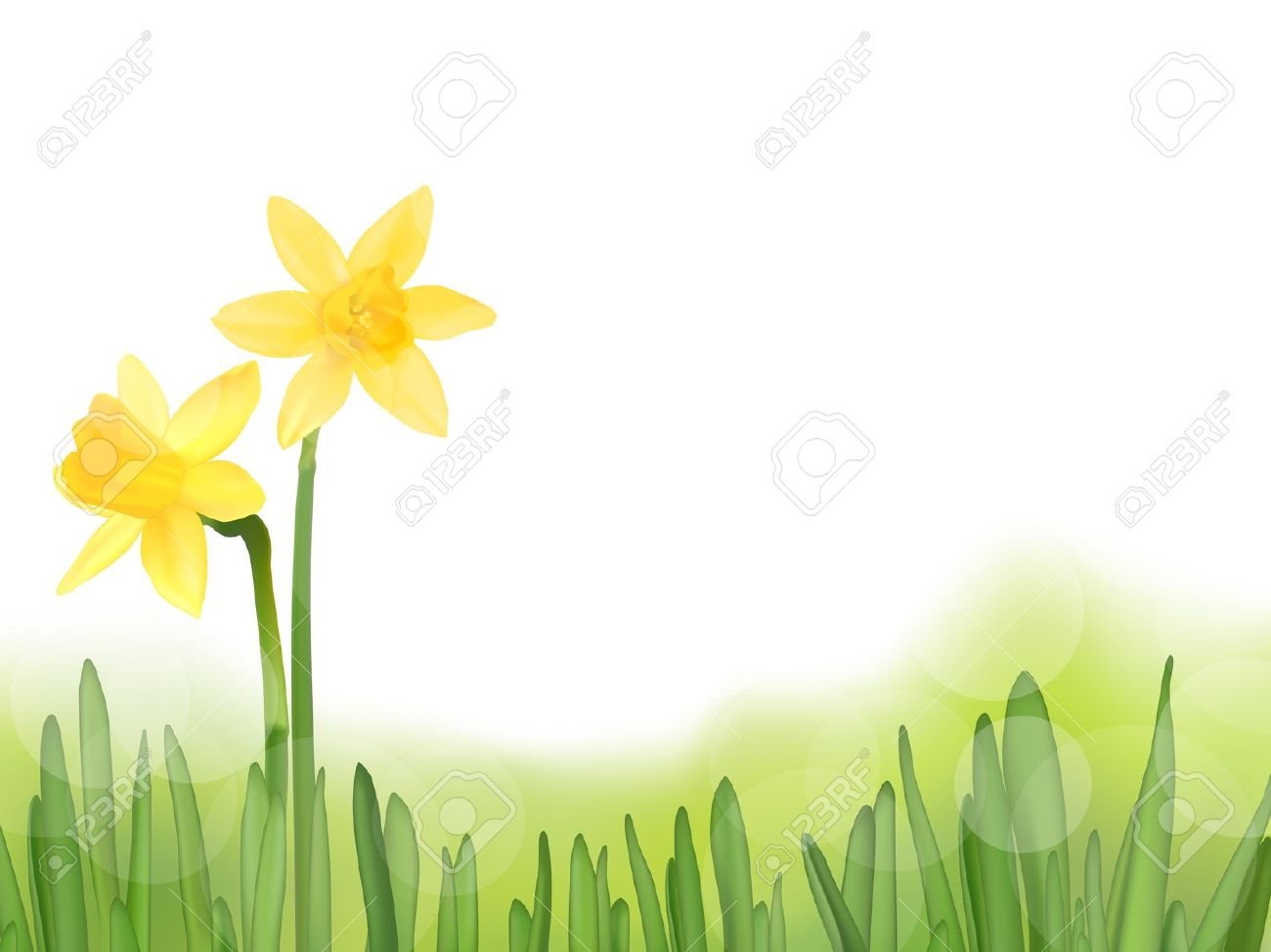 Grass With Daffodils, Vector Illustration Royalty Free Cliparts.