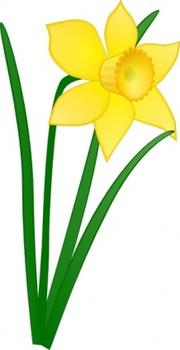 Daffodil Field Clip Art, Vector Daffodil Field.