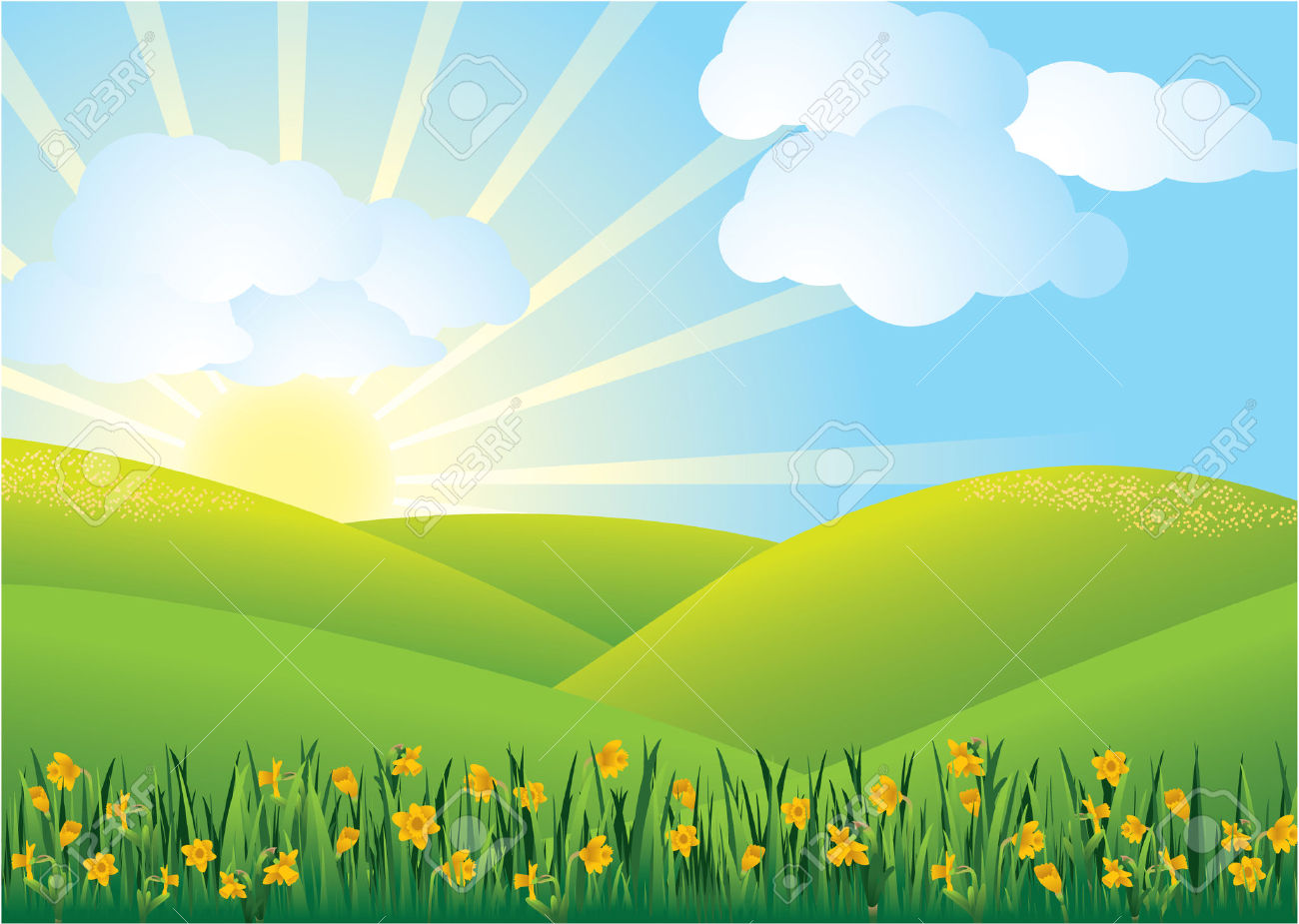 Daffodil Field Royalty Free Cliparts, Vectors, And Stock.