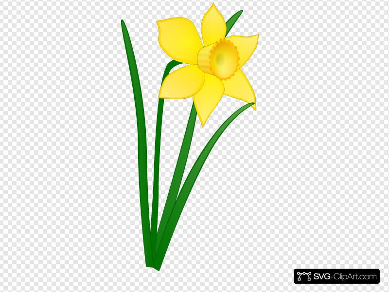 Daffodil Clip art, Icon and SVG.