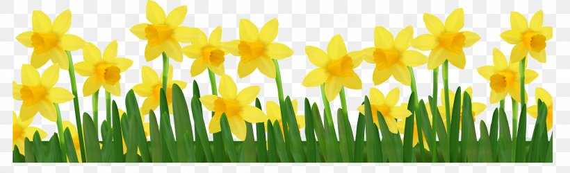 Daffodil Clip Art, PNG, 4200x1283px, I Wandered Lonely As A.