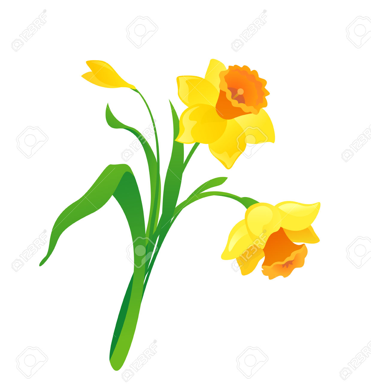 Daffodils clipart » Clipart Station.