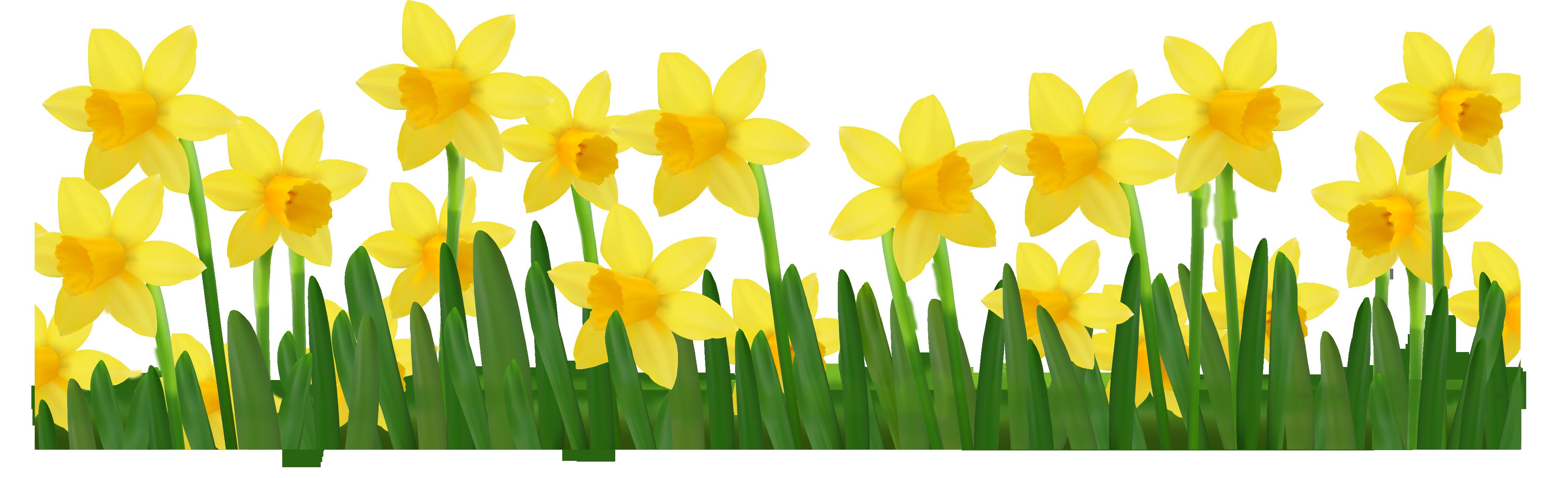 Free Daffodil Clip Art, Download Free Clip Art, Free Clip.