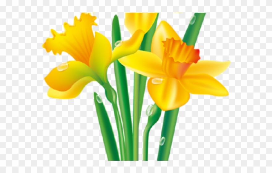 Daffodil Clipart Yellowflower.