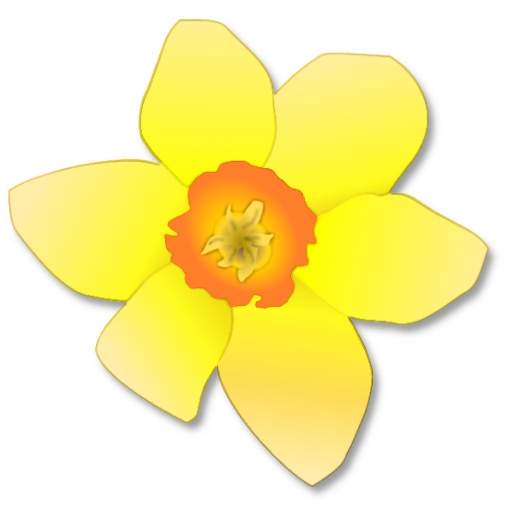 Daffodil clipart clip art, Daffodil clip art Transparent.