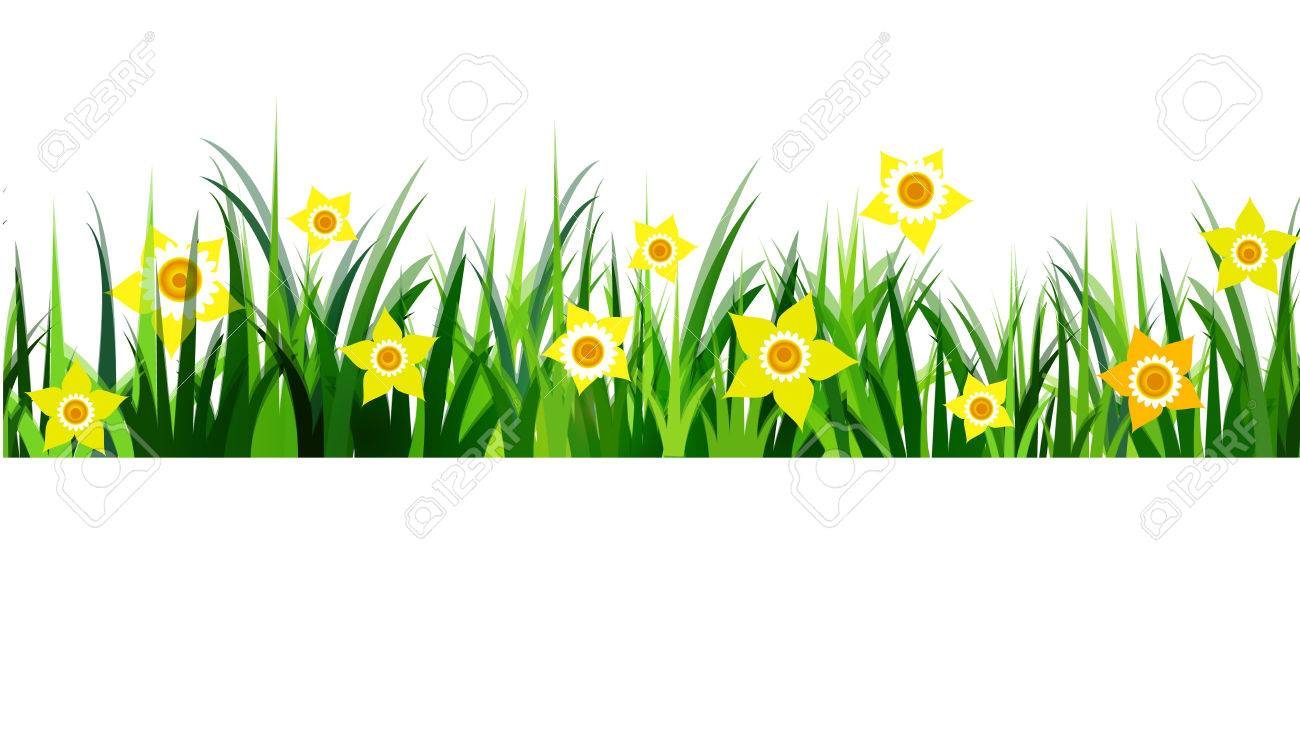 Green Grass seamless daffodils isolated clip art on white.