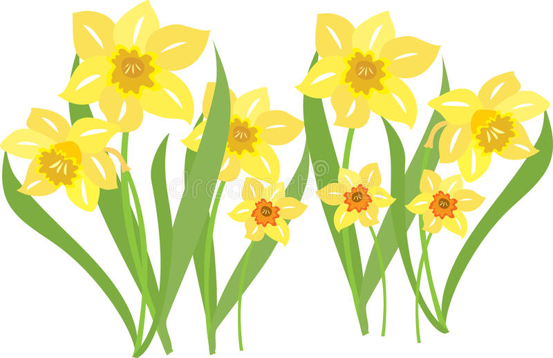 69+ Daffodils Clipart.