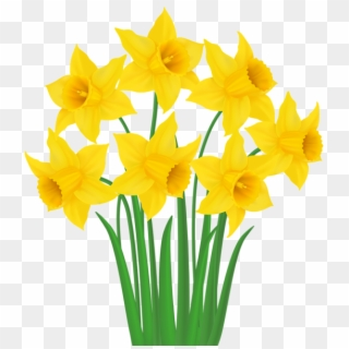 Daffodil PNG Transparent For Free Download.