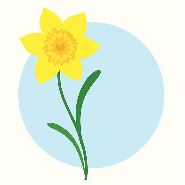 Daffodils clipart 2 » Clipart Station.