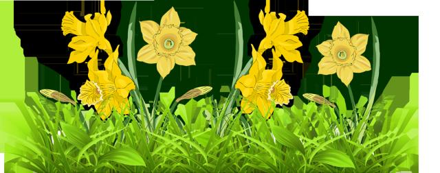 Daffodils Clip Art.