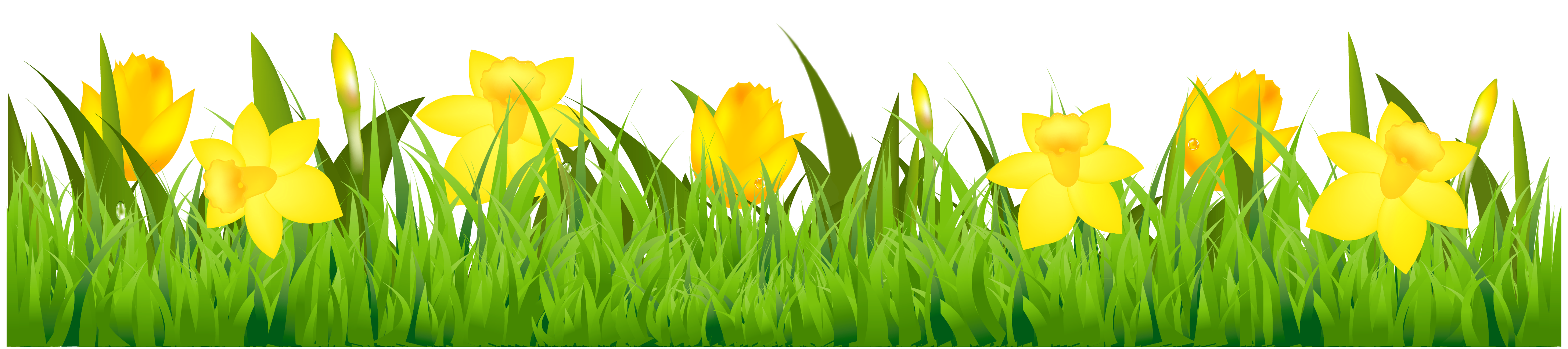 Grass with Daffodils PNG Clipart.