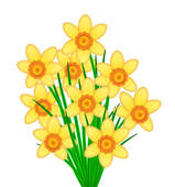 Daffodils Illustrations and Clipart. 643 daffodils royalty free.