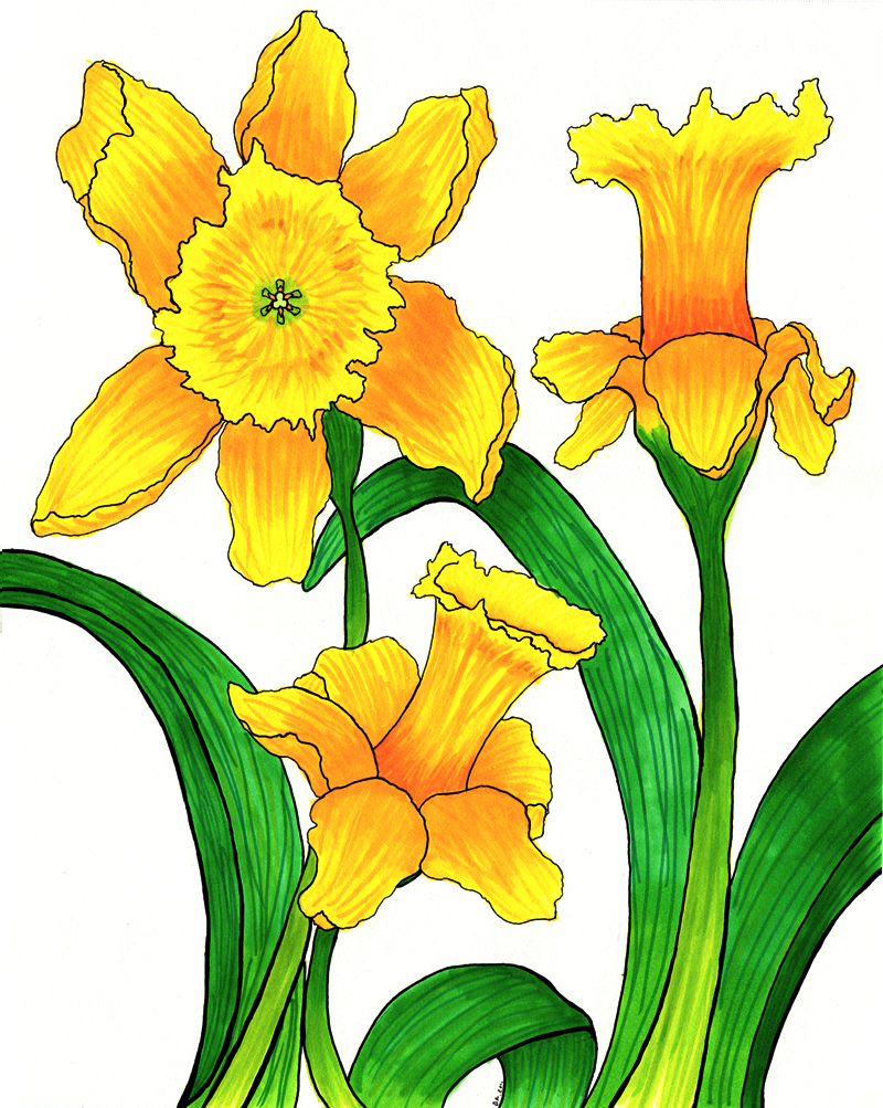 Bunch of daffodils clipart.