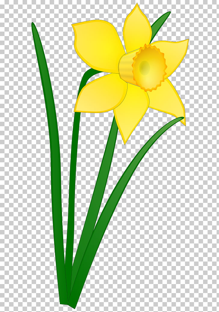 Daffodil Free content Scalable Graphics , Daffodils PNG.