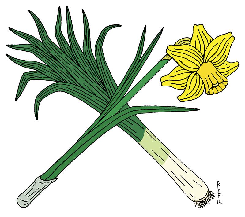 Daffodils leeks clipart #7