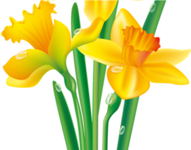 Daffodil Clipart Spring Break.