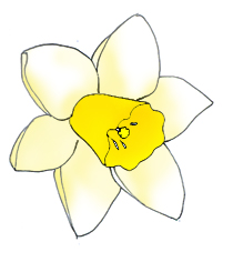 Daffodil clipart transparent background.