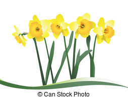 Daffodil Illustrations and Clip Art. 1,965 Daffodil royalty free.