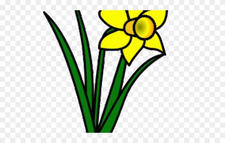 Daffodils Clipart Leek.